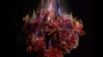 Mat Collishaw -  Fading Memories of the Sun -  2013 - c-type photograph Ed. 1 of 3 + 2 AP's 220 X 183 cm