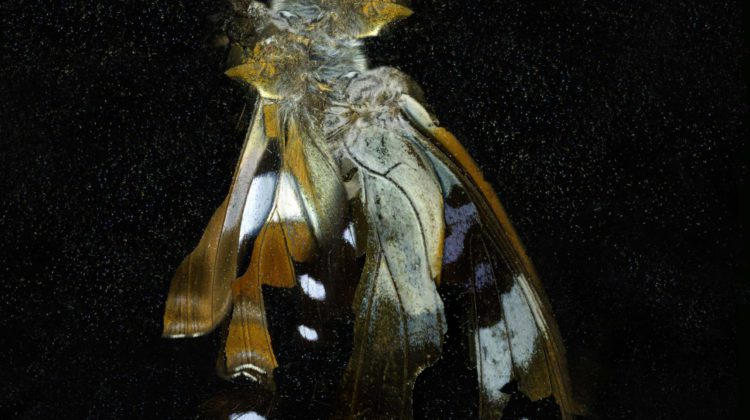 Mat Collishaw - Insecticide 38 - 2011 - c-type photograph Ed. 2 of 3 + 2 AP's 182 x 182 cm