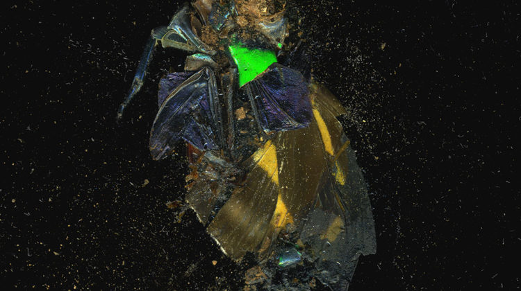 Mat Collishaw - Insecticide 39 - 2014 - c-type photograph Ed. 1 of 3 + 2 AP's 121,9 x 121,9 cm