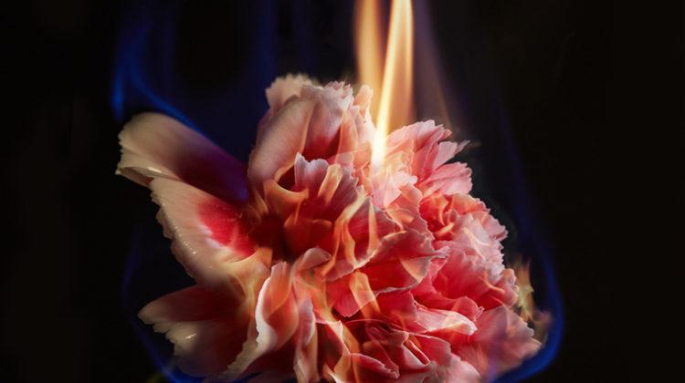 Mat Collishaw - Effigy - 2013 - c-type photograph - 120 x 89 cm - Ed. 1 of 3 + 2 AP's