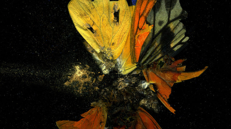 Mat Collishaw - Insecticide 13 - 2009 - C-type photo on Dibond - 182,9 x 182,9 cm Edition of 3