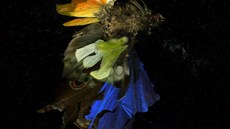 Mat Collishaw - Insecticide 15 - 2009 - C-type photo on Dibond - 182,9 x 182,9 cm Edition of 3