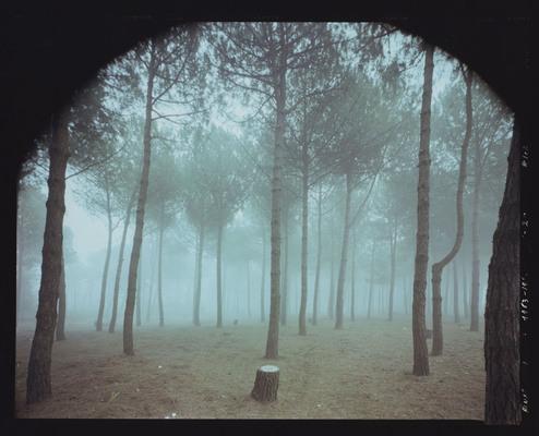 Guido Guidi, Tagliata di Cervia, viale Italia, 1984